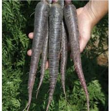 Siyah havuç tohumu