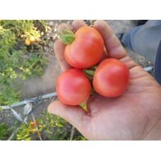 Pembe küçük yuvarlak verimli domates Fidesi