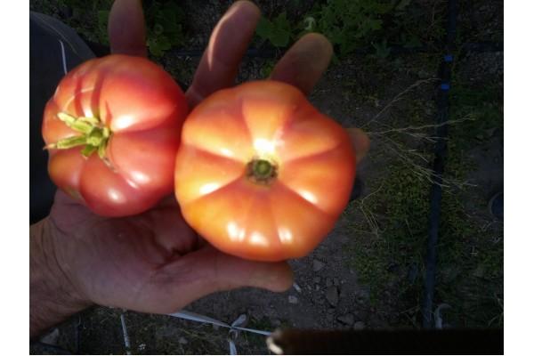 İri pembe ince kabuk sulu köy domatesi