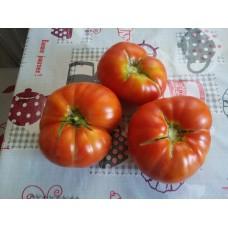 İri kırmızı köy domatesi