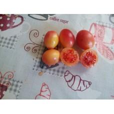 Pembe yumurta çeri bodur domates saksılık