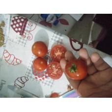 Kırmızı domates ceviz büyüklüğünde