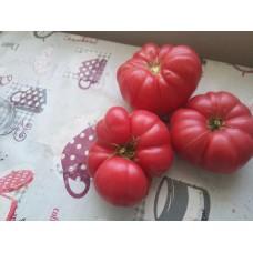 İri dilimli pembe köy domatesi fidesi