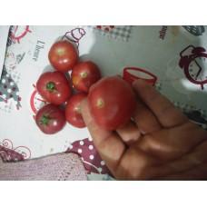 Cevizden iri pembe sulu domates