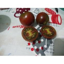 Bordo salkım domates
