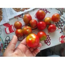 Sırık salkım yuvarlak kırmızı dayanıklı domates