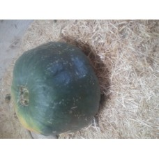 İri yeşil balkabağı
