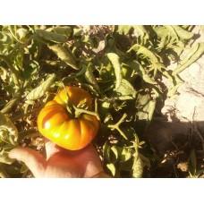 Bizim köy domatesi
