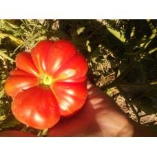 İri dilimli kıvırcık köy domatesi