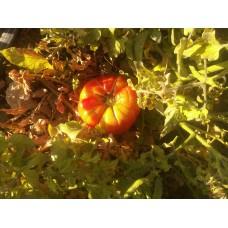 Kırmızı köy domatesi Diyarbakır