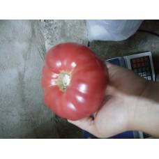 İri ince kabuklu Pembe köylüm domatesi