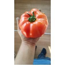Mamun domatesi iri etli domates