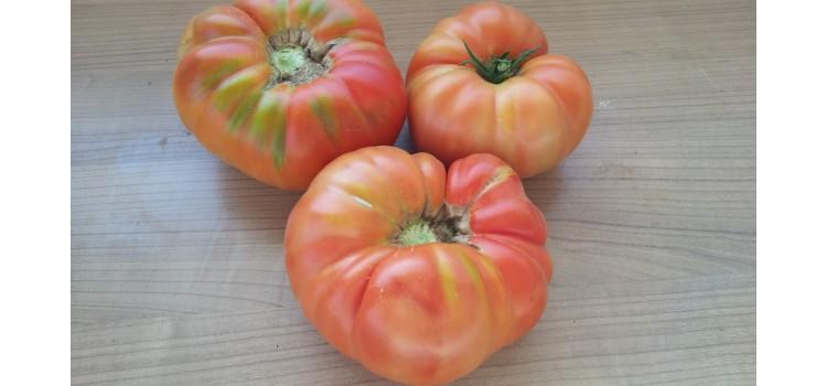 Arapgir çok iri sırık domates