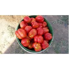 Dolmalık domates içi boş