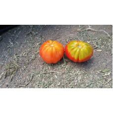 Nadir bulunan bir cins Bohça domatesi