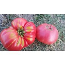 Şile domatesi pembe iri sofralık lezzetli