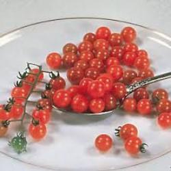 Topan patlıcan tohumu yerli atalık geleneksel tohum