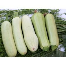 Yerli beyaz kabak(sakız kabak) gdo suz geleneksel atalık tohum